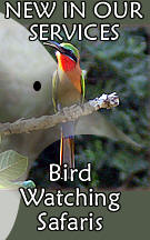 Kenya Bird Watching Safaris