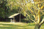 Mara siana springs tent in an indigenous forest