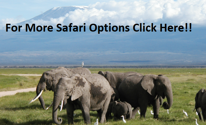 Book your Kenya Safari for the low season and enjoy huge discounts on Beach Hotels, Safari Lodges and Safari Charges - Click Here