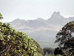 Mount Kenya seen through foliage and a cloudy sky