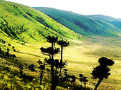 Part of the Ngorongoro crater